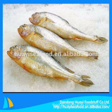 wild frozen yellow croaker processed from our own factory